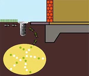 Soil Treatment For Termites Termites Service In Johor